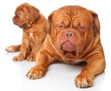 """Sales Dog: Why Business Owners cannot """"Teach an Old Dog New Tricks"""""""